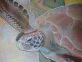 La Tartaruga con un Occhio solo (detail)